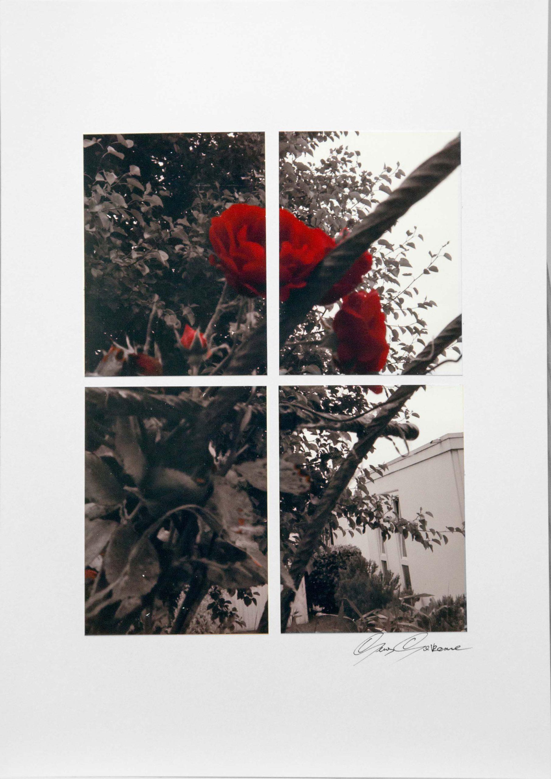 (6) Roos